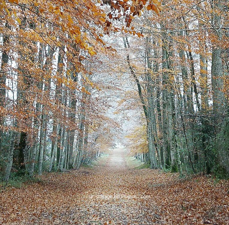 ©Colette Malpaud Allée d'automne aux Martinettes en Limousin, blog cottage chic 22