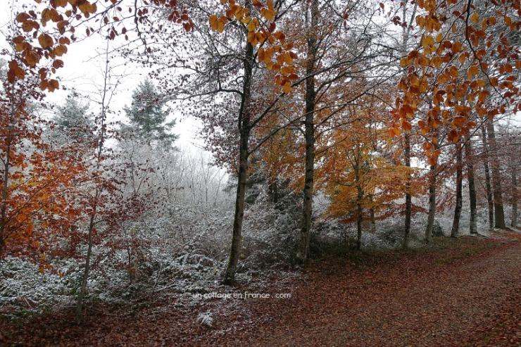 ©Colette Malpaud Allée d'automne en Limousin, blog cottage chic 12s