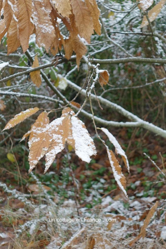 ©Colette Malpaud Allée Un peu de neige dans la forêt, blog cottage chic