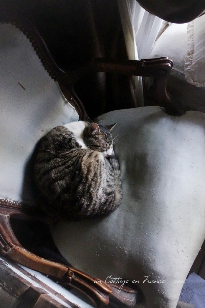 Hibernation du chat de campagne, Blog campagne chic