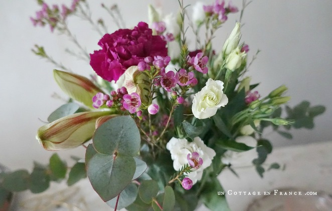 Les oeillets fuschia de la Saint Valentin, un cottage en france 5