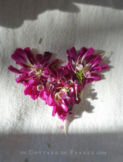 Oeillets de a Saint valentin, blog country chic