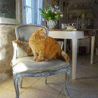 Le fauteuil en blanc & recette des madeleines royales (The whitened armchair & royal 'madeleines' recipe)