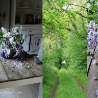 Charme du mauve : au temps du lilas et de la glycine | Seductive purple hues: the time of lilac and wisteria