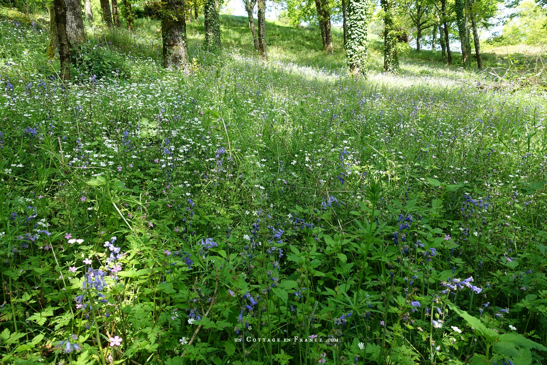 Chemin de printemps à la Gartempe, blog campagne chic 1