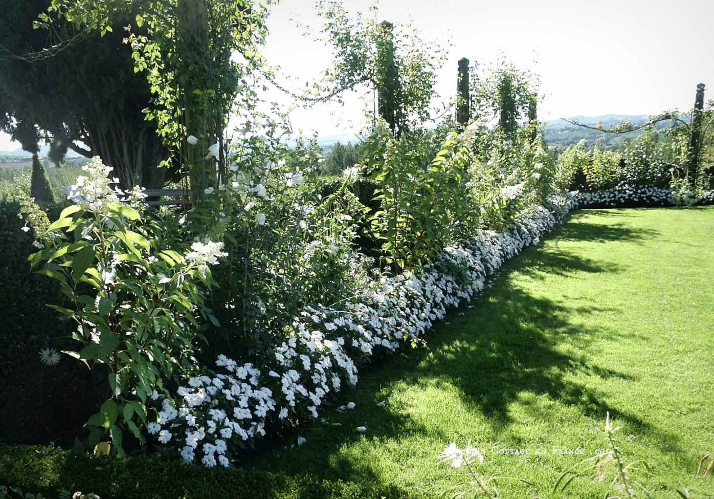 Jardins de buis, topiaires, jardin romantique, french topiaries