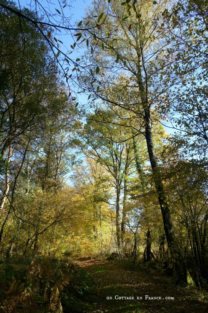 Novembre à Blanzac, un Cottage en France 6