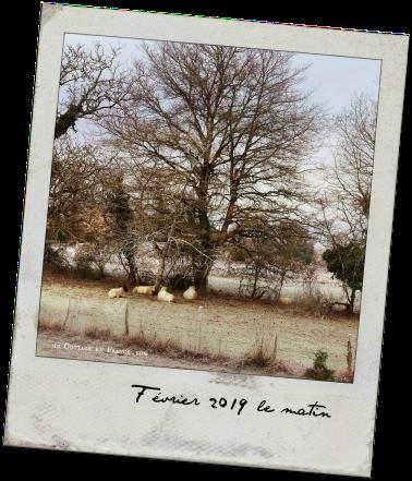 Un matin de février 2019 (In the morning - Feb 2019)