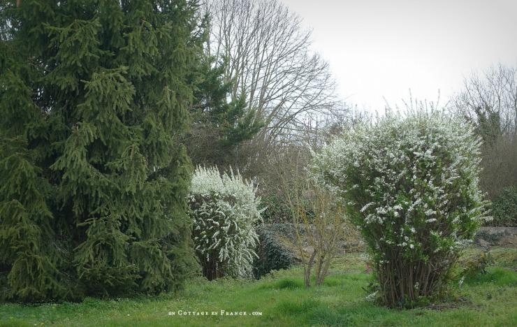 La spirée blanche un matin de mars, Un cottage en France
