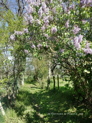 Le lilas des grands champs (The lilac tree on the way to the fields)